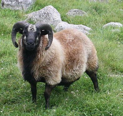 A Shepherd's Glossary